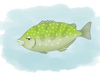 あ、アオリイカばっか釣ってちゃだめじゃないすか ―生態学的にかっこいい生き方―