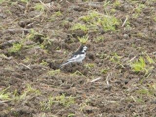 春告げ鳥を追い立てる