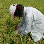 収穫期調査 2