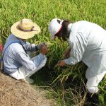 収穫期調査 1